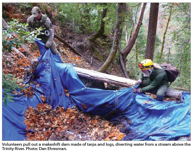 Dirty Business: Volunteer Crews Clean up Toxic Grow Sites